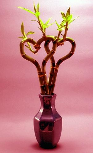 Растения амулеты